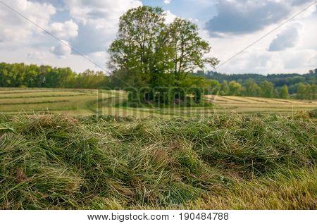 Closeup Detail Of Texture In Green Grass Lawn