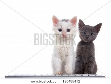 One fluffy white kitten sitting in front of a computer keyboard gray kitten sitting slightly behind both looking directly at viewer isolated on white background.