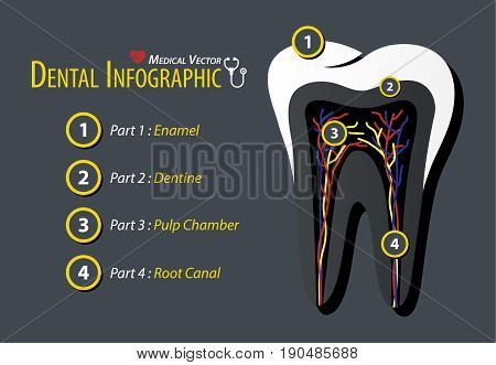 Dental Infographic . Flat design . Vector .