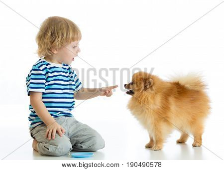 Child boy training his Spitz dog. Isolated on white background.