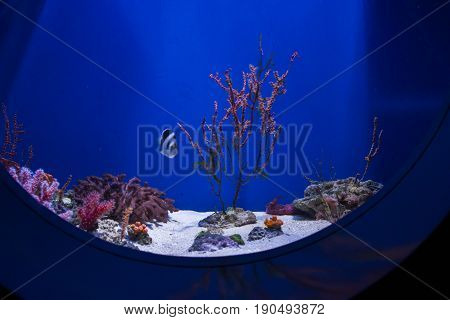 The blue bottom of the aquarium with corals, algae, fish and scenery.