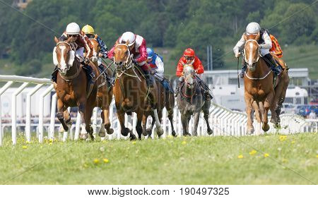 STOCKHOLM SWEDEN - JUNE 06 2017: Tough fight between the jockeys riding race horses at Nationaldags Galoppen at Gardet. June 6 2017 in Stockholm Sweden
