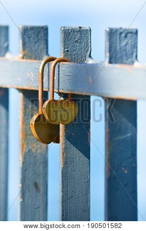 Padlocks hanging on the metal fence. Closeup