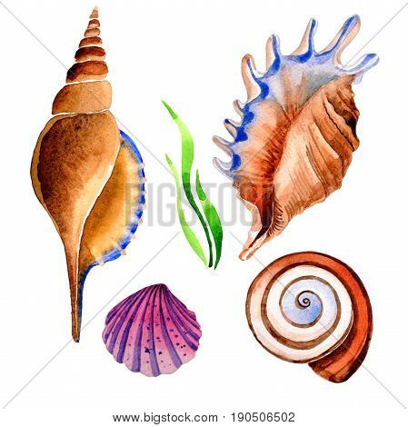 Watercolor summer beach seashell tropical elements. Underwater creatures: mollusk, cockleshell, scallop and others. Aquarelle elements for background, texture, wrapper pattern.