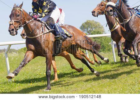 STOCKHOLM SWEDEN - JUNE 06 2017: Chaos of many jockeys and running brown arabian race horses at Nationaldags Galoppen at Gardet. June 6 2017 in Stockholm Sweden