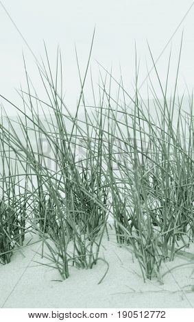 Close up of sand dunes with dune grass