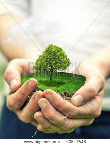 hands holding big plant with soil on blurred abstract background. Enviromental background