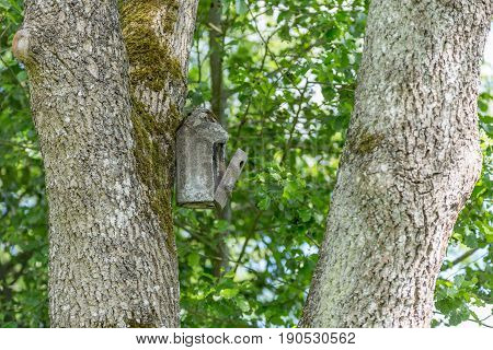 Birdhouse For Cuckoo Nest Hang In A Large Tree