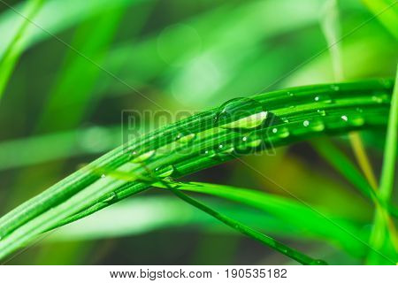 Green grass with water rain drop dew. Clean water after rain in a sunny day. Concept for freshness, clean, natural sunny wellness healthy lifestyle