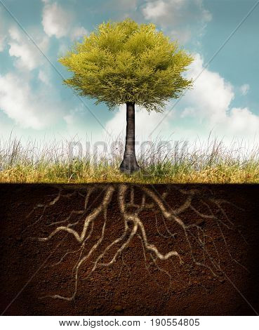 Conceptual image representing a rooted tree above grass with roots underground