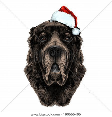 dog head brown wool breed Alabai or the Central Asian shepherd dog in Santa hat full face symmetry sketch vector graphics color picture