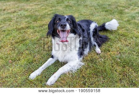 Friendly Cross Breed Dog On Grass
