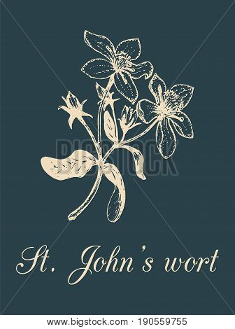Vector St. Johns Wort branch illustration with flowers. Hand drawn botanical sketch of officinalis plant. Medicinal herb isolated on black background.