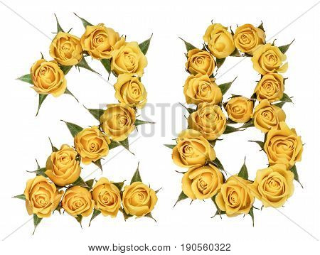 Arabic Numeral 28, Twenty Eight, From Yellow Flowers Of Rose, Isolated On White Background