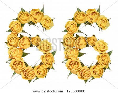 Arabic Numeral 66, Sixty Six, From Yellow Flowers Of Rose, Isolated On White Background