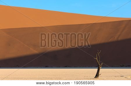 Horizontal lines falling on the dunes at Daedvlei in the Namib Naukluft Park in Namibia