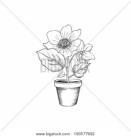 Flower pot engraving. Floral background with flower blossom for garden design