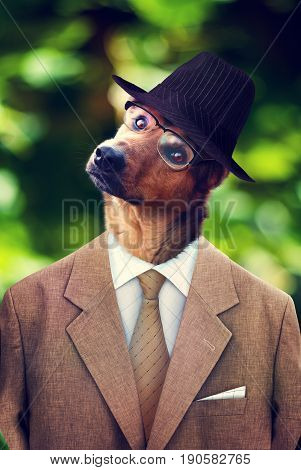 Dog in a hat suit and glasses. Photomanipulation