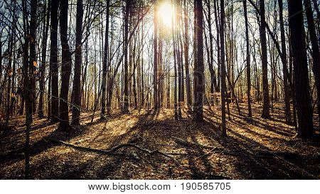 A shadowy dark forest with the sun shining through the trees.