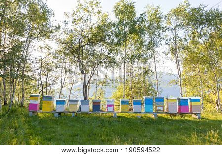 Colourful beehives in a field. Summer season. North Italy, Europe.