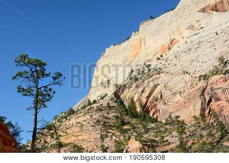 Rock Formation and tree Zion National Park