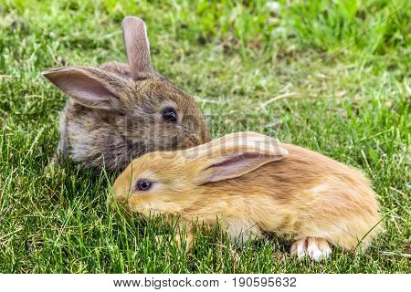 grey and red young rabbits on green grass