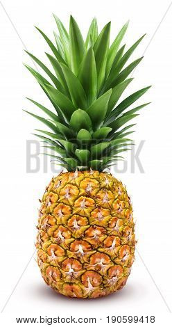 Pineapple isolated. One whole pineapple with green leaves isolated on white background
