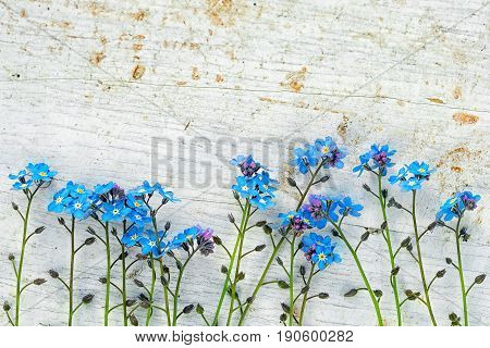 Forget Me Not Flowers In A Row On A Wooden Background With Copy Space For Your Text Above