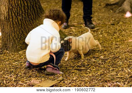 Little girl is playing with a little pig is very cute and funny