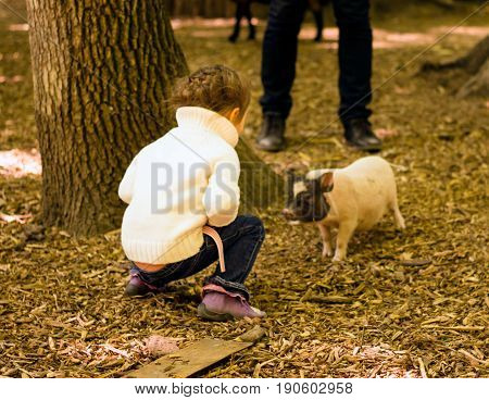 A little girl is sitting and looking at the little pig running towards her animals are our friends