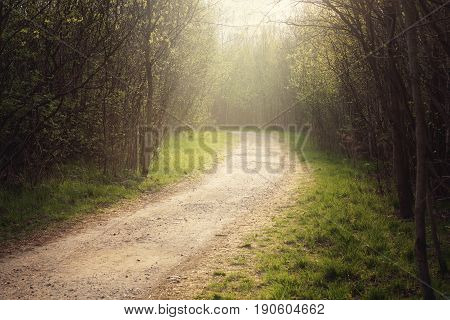 The path in the forest, leaving behind the turn, illuminated by the morning sun.