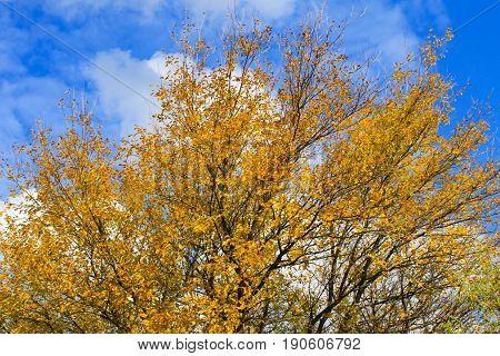 Deciduous Forest On Autumn