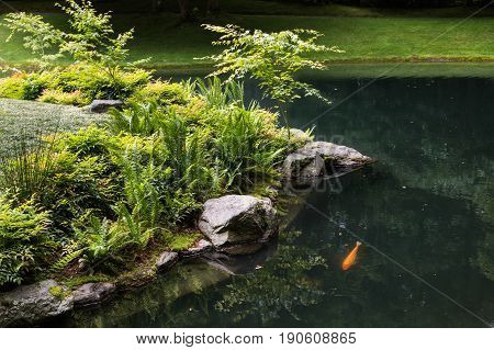 A green koi pond in a landscaped garden