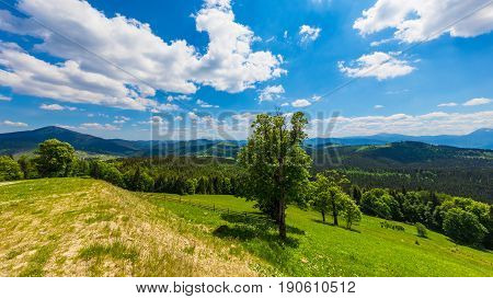Scenic summer panorama of Carpathian Mountains landscape with green forests hills grassy meadows and blue sky in Ukraine