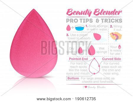 Vector makeup - sponge infographic isolated on white background. Beauty blender for your design sale or advertising. Vector EPS 10