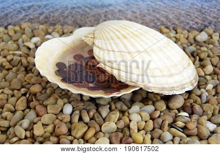 Sea cockleshells are formed of limestone. The cockleshell is located on the beach. Money is located in a cockleshell.