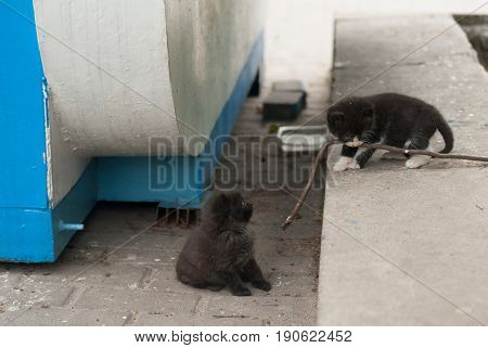 Two homeless little cats on the street