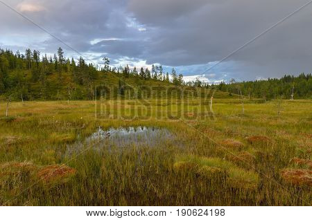 Bog landscape in northern Finland. Cloudy sky.