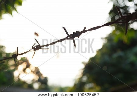 Barbed Wire Fence With Sharp Spikes
