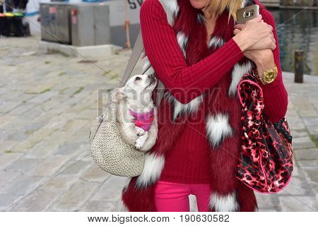 Woman walks with Chihuahua dog in her purse