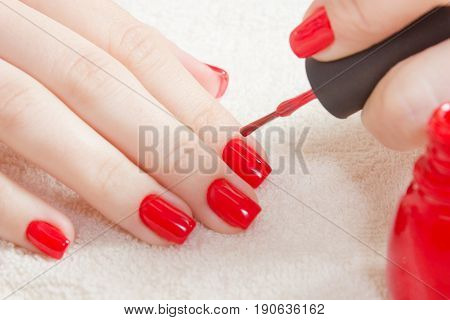 Manicure - Beautiful manicured woman's nails with red nail polish on soft white towel. There is a bottle of red lacquer