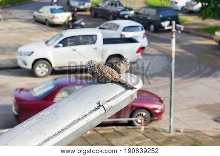 two pigeons sitting on the electric light pole over blurred car park background
