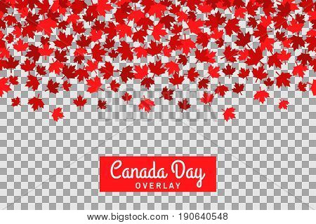 Seamless pattern with maple leafs for 1st of July celebration on transparent background. Vector Illustration. Independence Day of Canada.