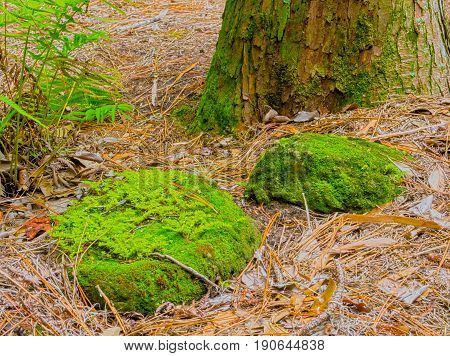 HDR photo image of rocks, tree trunk & ferns