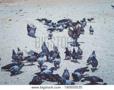 Dove. Important dove. Dove under sunlight. Dove in park. White dove. Beautiful dove. Street dove. Dove finding meal. Best dove.