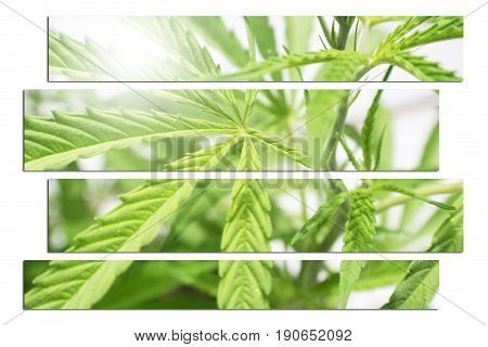 Marijuana Leaf Art High Quality Stock Photo