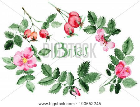 Watercolor Briar flower and berries, leaf and branch isolated on white. Briar set. Perfect for DIY and wedding or greeting card