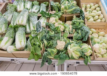 Different kinds of cabbage and radish in the supermarket Auchan, Moscow Russia