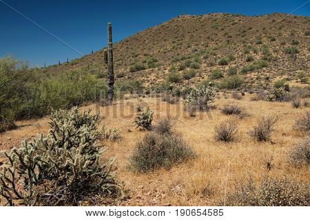 Saguaro plant at Phoenix Sonoran Preserve in Arizona