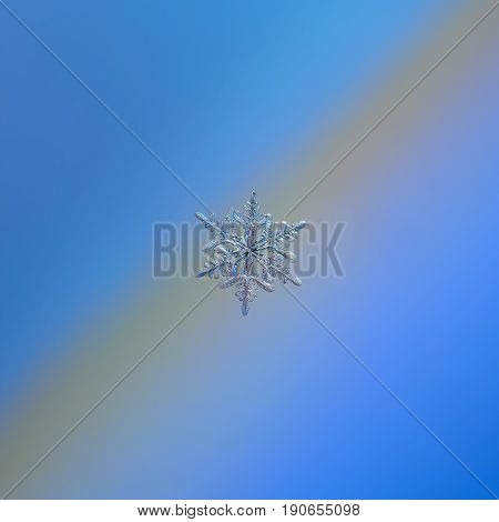 Real snowflake macro photo: small stellar dendrite snow crystal with six long, elegant arms, many side branches and glossy, relief surface, glittering on smooth blue - gray gradient background.